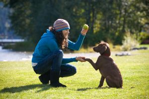 Woman playing with and training puppy to shake hands