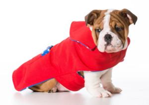Keep Warm With Dog Jackets