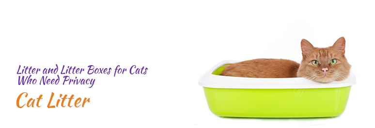 The Best Kind Of Wet Cat Food